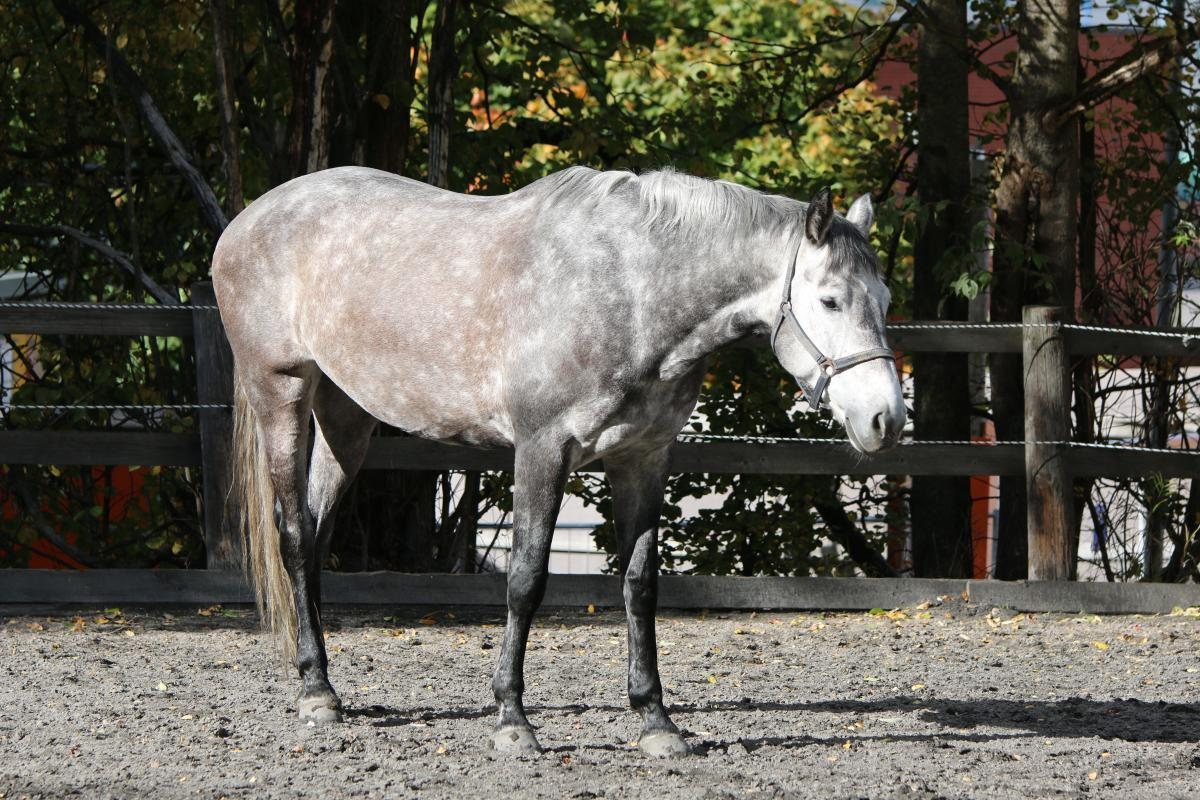 Herbella, tamma, s. 2008 Viro