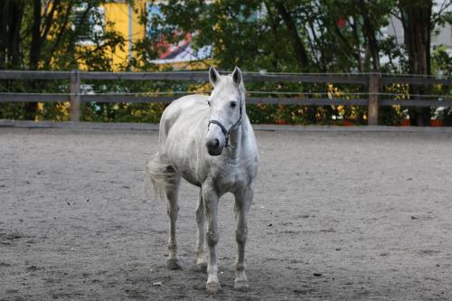 Otto, ruuna, s. 2002 Ruotsi
